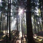 Beziehung der Deutschen zum Wald